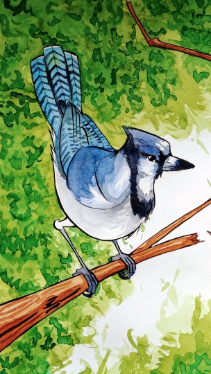 30Years_Bluejay